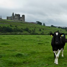Rock of Cashel III